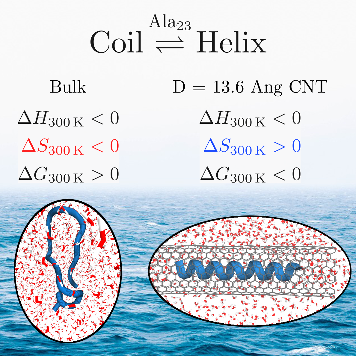 Thermodynamics of Helix−Coil Transitions of Polyalanine in Open Carbon Nanotubes